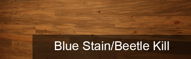 Learn About Beetle Kill Pine In Colorado Blue Stain Wood