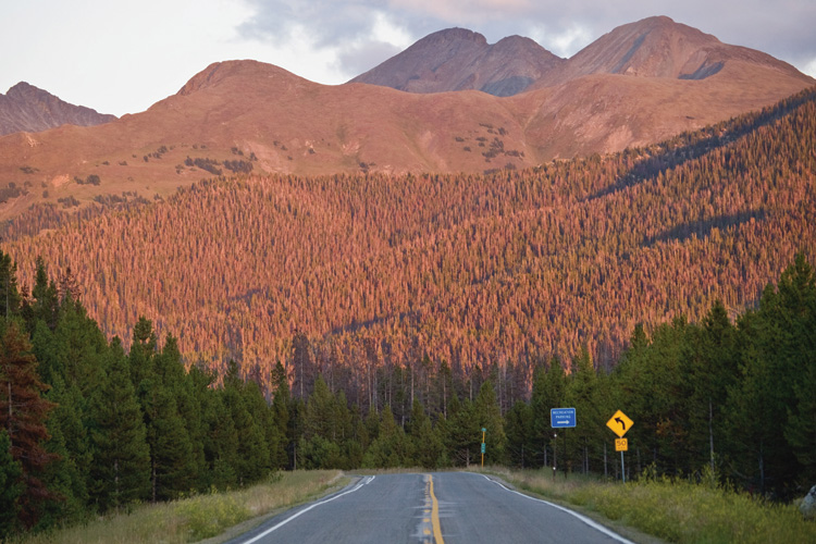 A mountain with beetle kill damage in Colorado