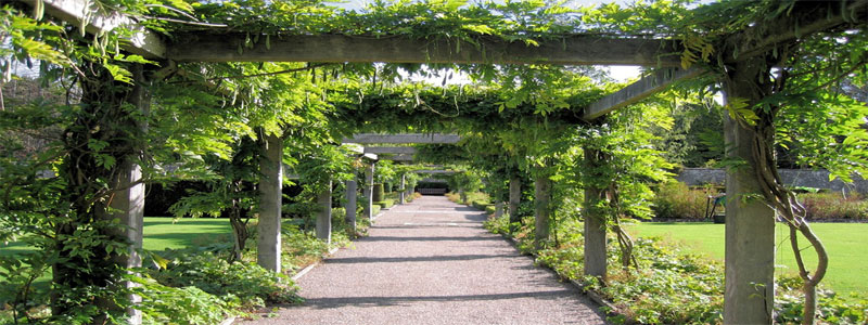a pergola covered with green leaves