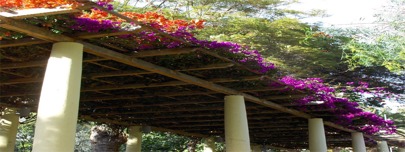 a cedar pergola with purple and orange flowers
