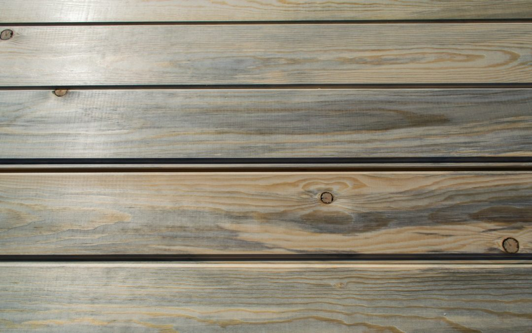 blue stain pine