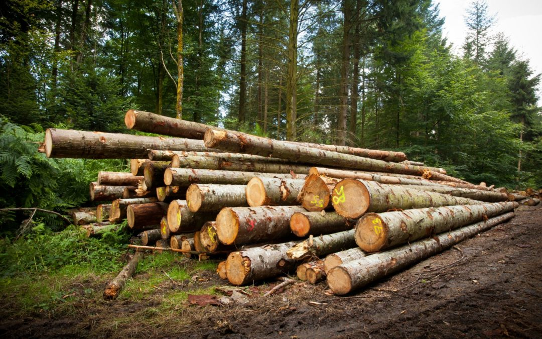 2019 Lumber Outlook | Denver Lumber Supplier – Updated 8.23.18