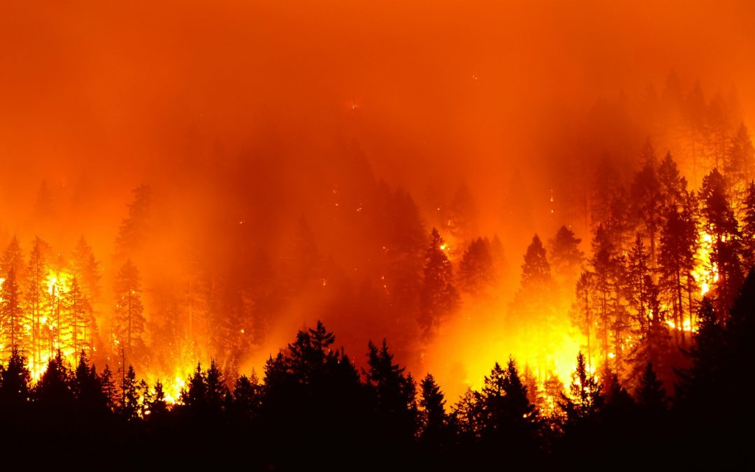 Forest Fires Cause Expansion of Logging