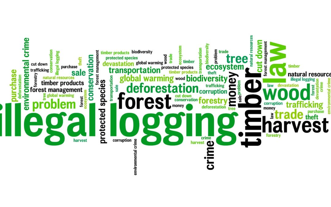 Illegal Logging and its Impact