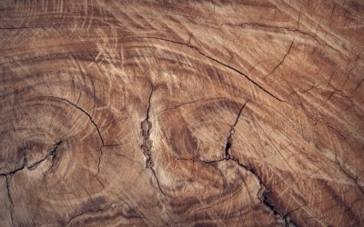 The Movement of Wood