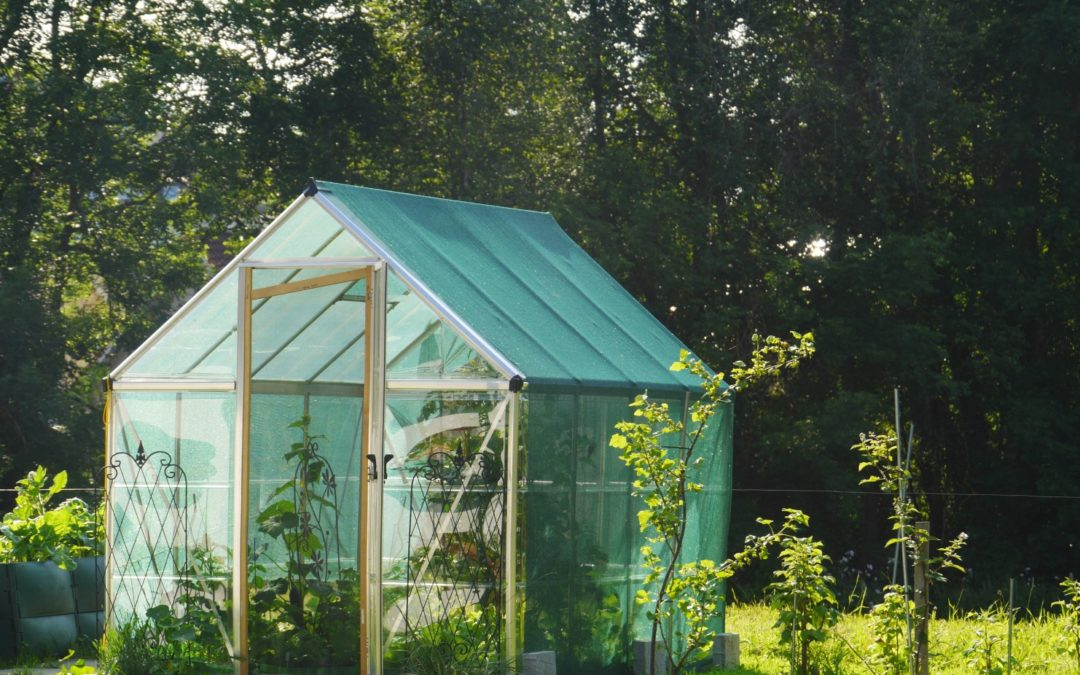 Building A Greenhouse Using Beetle Kill Pine