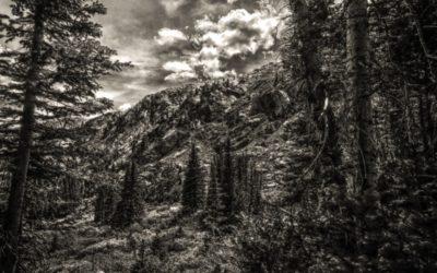 The Buckhorn Exchange Uses Denver Lumber