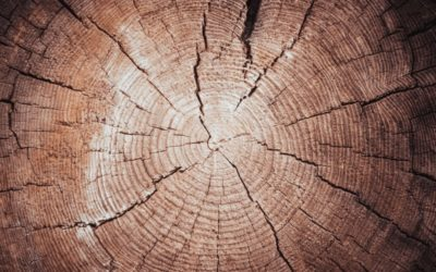 A Guide to the Lumber Process