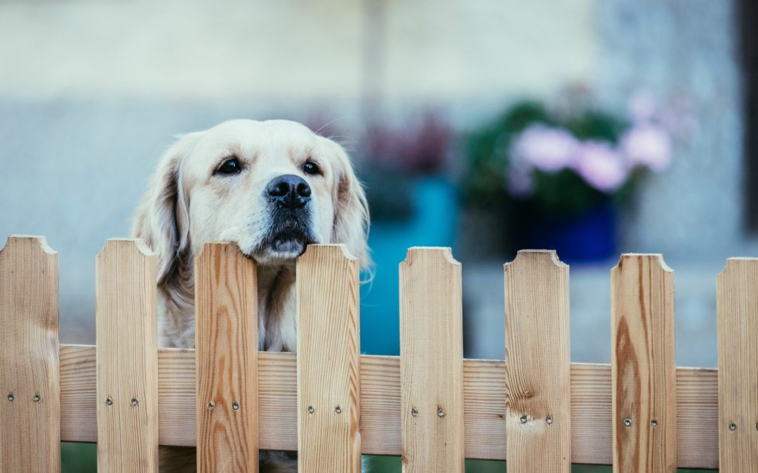 Dogscaping: Your Complete Guide to a Dog Friendly Backyard