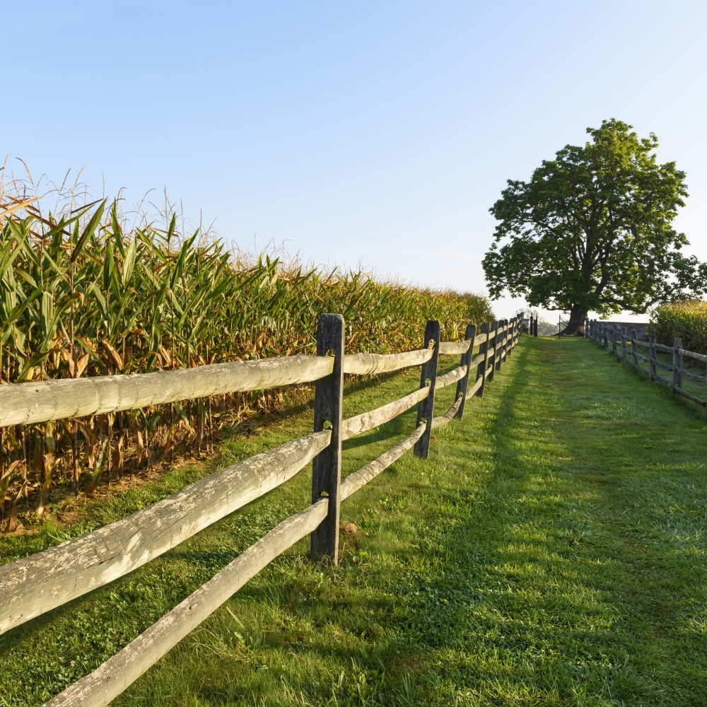 The In's and Out's of Split Rail Fencing