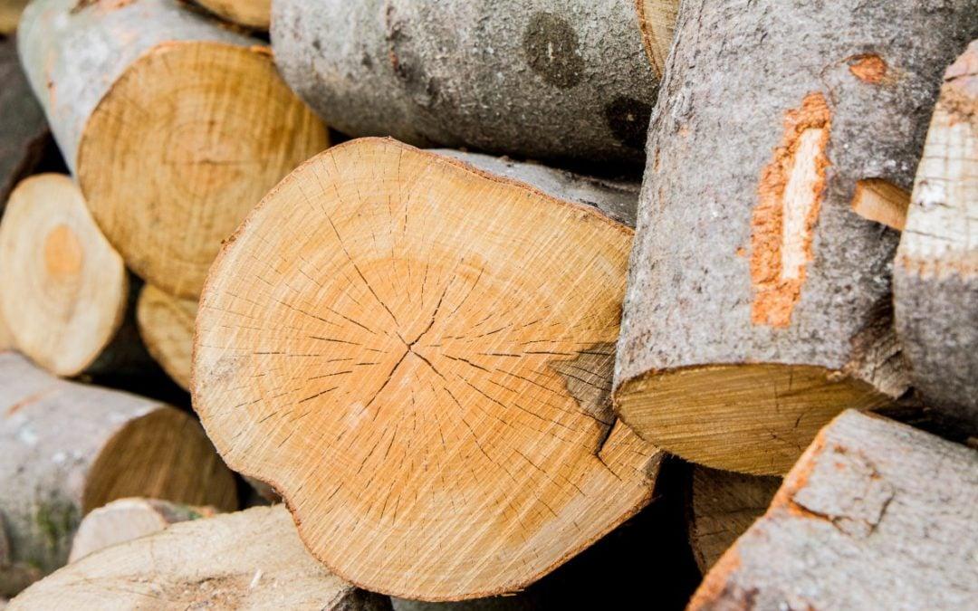 Creative Ways to Use Tree Trunks