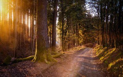 Celebre la Semana Nacional de Productos Forestales