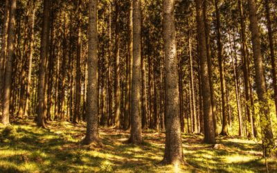 7 Facts About Trees That Will Surprise You