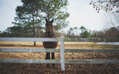 Elegir la valla adecuada para caballos