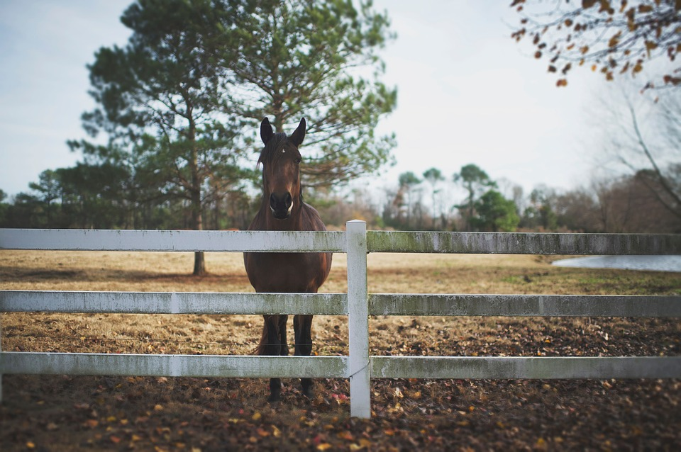 How to Choose the Right Horse Fence