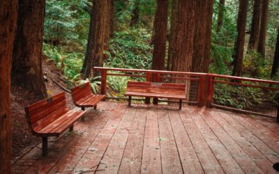 Redwood Decking: Things to Consider