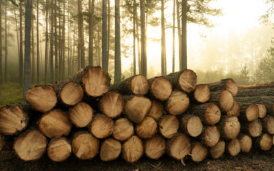 Which wood species maintain their beauty as they age?